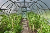 Netherlands Greenhouse Cultivation Market