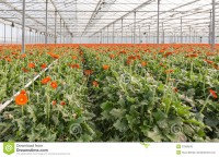 Netherlands Greenhouse Market