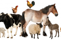 Global animal health
