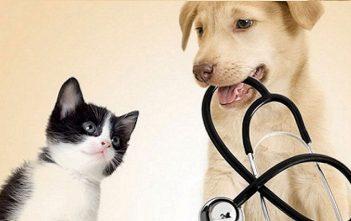 Global animal health