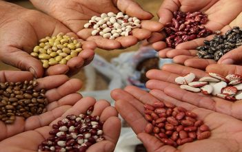 Seed Coating Industry India