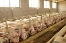 China Hog Production and Pork Market Research Report