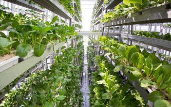 North America crop protection market