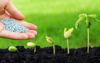Global Green Fertilizer Market Trends