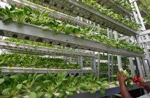 North America Vertical Farming Market Research Report