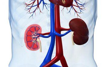 Renal Diseases market Research
