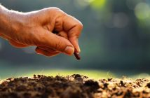South Africa Seed Market Research Report