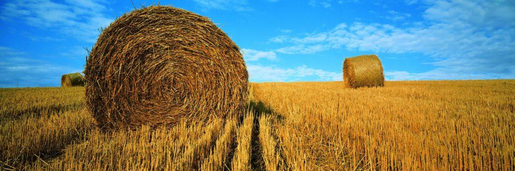 Arysta sales Crop Protection Poland