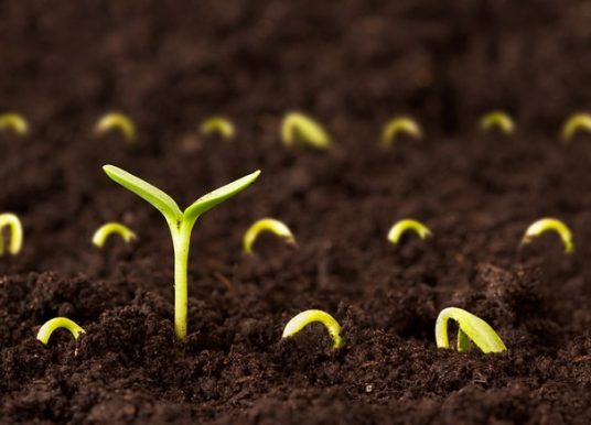 BRAZIL SEED MARKET BY TECHNOLOGY TYPE (OPEN POLLINATED, HYBRID SEEDS AND GENETICALLY MODIFIED) BY CROP TYPE (SOYBEAN, CORN, WHEAT, RICE, COTTON, BEANS, FORAGE, VEGETABLE AND FLOWER SEEDS) – OUTLOOK TO 2022