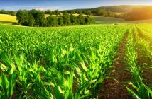 Global Agriculture Market Industry Developments