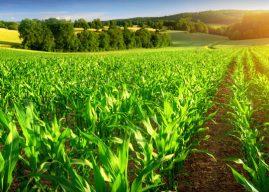 Global Farm Animal Healthcare Market Research: Ken Research