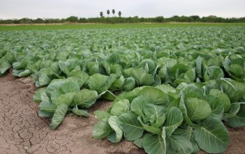Global Vegetable Farming Market