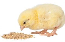 Poultry Feed Competitive Landscape