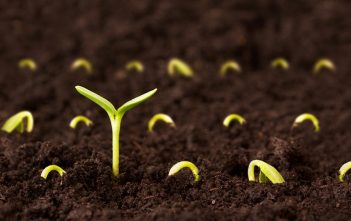 Seed Industry Analysis