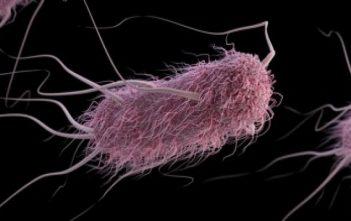 Escherichia Coli Infections Market Report