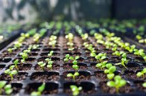Seed Industry Research Reports