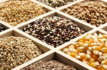Seed Market Research Reports