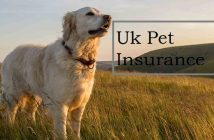Uk Pet Insurance Market
