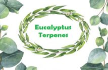 Asia Eucalyptus Terpenes Industry Research Report