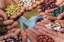 Seed Industry Research Report