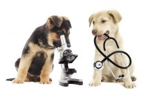Global Veterinary Services Market