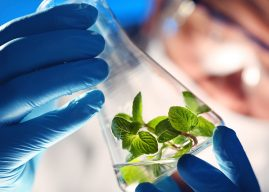 Wide Usage Of Bio Based Chemicals Globally Market Outlook: Ken Research