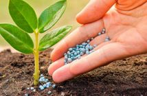 Global Agricultural Micronutrients Market