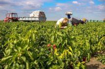 Global Agriculture Market