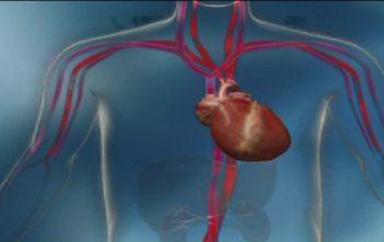 Global Cardiac Assist Devices Market