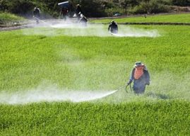Growing Trends In The Crop Protection Market Outlook: Ken Research