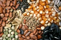 Asia Pacific Seed Market