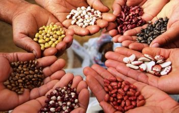 Asia Seed Industry