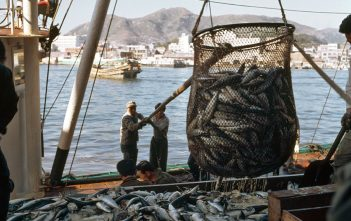 Vietnam Fishery Industry