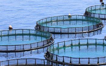 Global Aquaculture Products Market