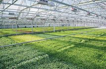 Global Indoor Farming Technology Market