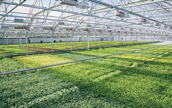 Global Indoor Farming Technology Market