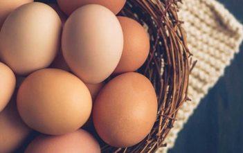Global Egg Industry