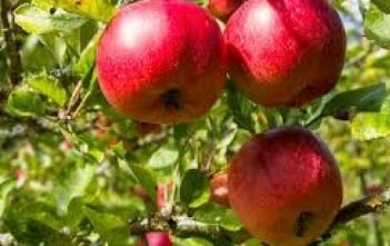 Global Fruit and Nut Farming Market