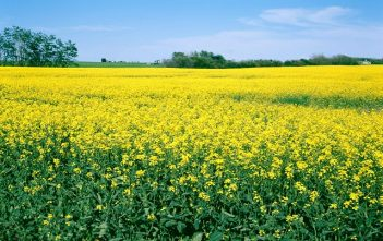 Global Oilseed Farming Market