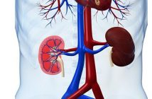 Global Nephrology Devices Market
