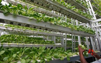 North America Vertical Farming Market Research Report