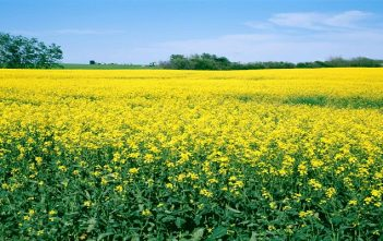 Global Oilseed Farming Market Trends