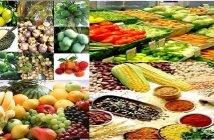 Global Agriculture Industry Analysis