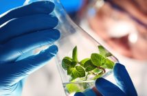 Global Bio-Based Platform Chemicals Market