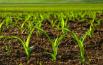 Global Crop Production Market