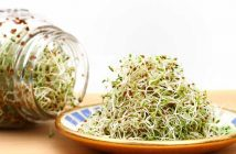 Global Aalfalfa Concentrate Market