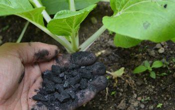 Global Biochar Fertilizer Market