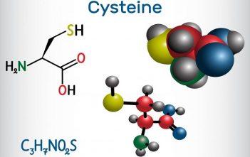 Global Cysteine Market