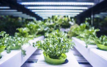Global Agricultural Biologics Market