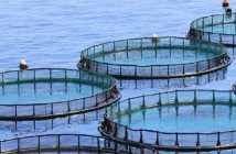 Global Aquaculture Products Market